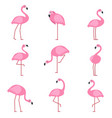 cartoon pictures exotic pink bird flamingo vector image