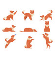 dog movement funny dogs activities cute animal vector image