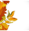 Realistic red yellow and green autumn leaves vector image vector image