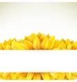 Sunflower on white background EPS 10 vector image