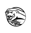 angry honey badger swiping attacking mascot black vector image vector image