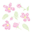 decorative cherry blossom set vector image