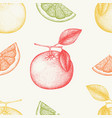 vintage grapefruit background in pastel colors vector image vector image