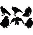 falcon collection - vector image