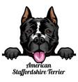 american staffordshire terrier - color peeking vector image vector image
