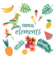 floral summer tropical elements parrot leaves and vector image vector image