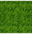 Green grass seamless texture vector image