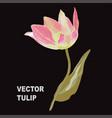 hand drawn tulip vector image vector image
