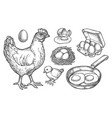 sketch chicken products and farm poultry eggs vector image