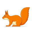 squirrel standing on a white background vector image