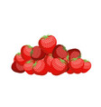 bunch of strawberries lot of juicy red berry vector image