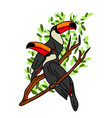 hand drawn toucan on white background vector image vector image