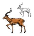 african gazelle or indian antelope animal sketch vector image