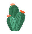 cartoon cactus bright cacti colored vector image