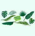 collection tropical leaves element vector image