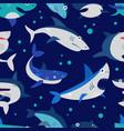 shark cartoon seafish with sharp teeth in vector image vector image