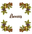 Sketch berries frame vector image vector image