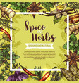 herb and spice sketch label with seasonings frame vector image vector image