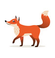 icon of red fox isolated forest woodland animal vector image vector image