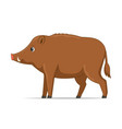 wild boar standing on a white background vector image