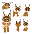 cartoon brown kitten or lynx in different poses vector image vector image