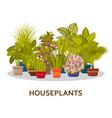 decorative houseplants in pots background florist vector image vector image