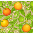 grapefruit pattern vector image vector image