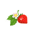 strawberry with leaves and blossom vector image vector image