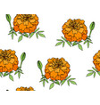 tagetes or marigold flower vector image