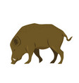 wild boar isolated on white background graphics vector image