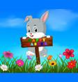 easter bunny hanging up blank wood in garden vector image