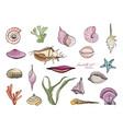 hand drawn seashells collection colorful vector image