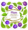 plum elements set vector image vector image