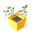 tree in square shape flower-pot green leaf vector image