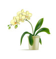 white orchid pot realistic isolated vector image vector image