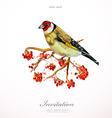 watercolor painting wild bird on branch rowan vector image