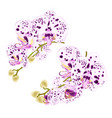 branches orchids dots purple and white flowers vector image