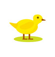 cute duck isolated icon vector image vector image