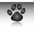 Paws vector image