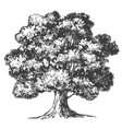 tree hand drawn realistic vector image