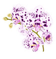 branch orchids with dots purple and white vector image vector image