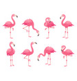exotic pink flamingos birds flamingo with rose vector image vector image