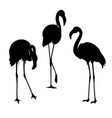 flamingo isolated exotic bird vector image