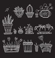 flower pots and house plants set vector image