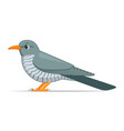 cuckoo bird on a white background vector image vector image
