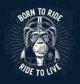 monkey in motorcycle helmet and glasses vector image vector image