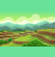 rice fields plantation mountain cascade landscape vector image