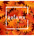 Autumn background with oak leaves and acorns vector image