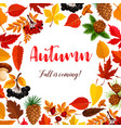 autumn poster of leaf fall or forest berry vector image vector image