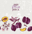 background with seamless plum border vector image